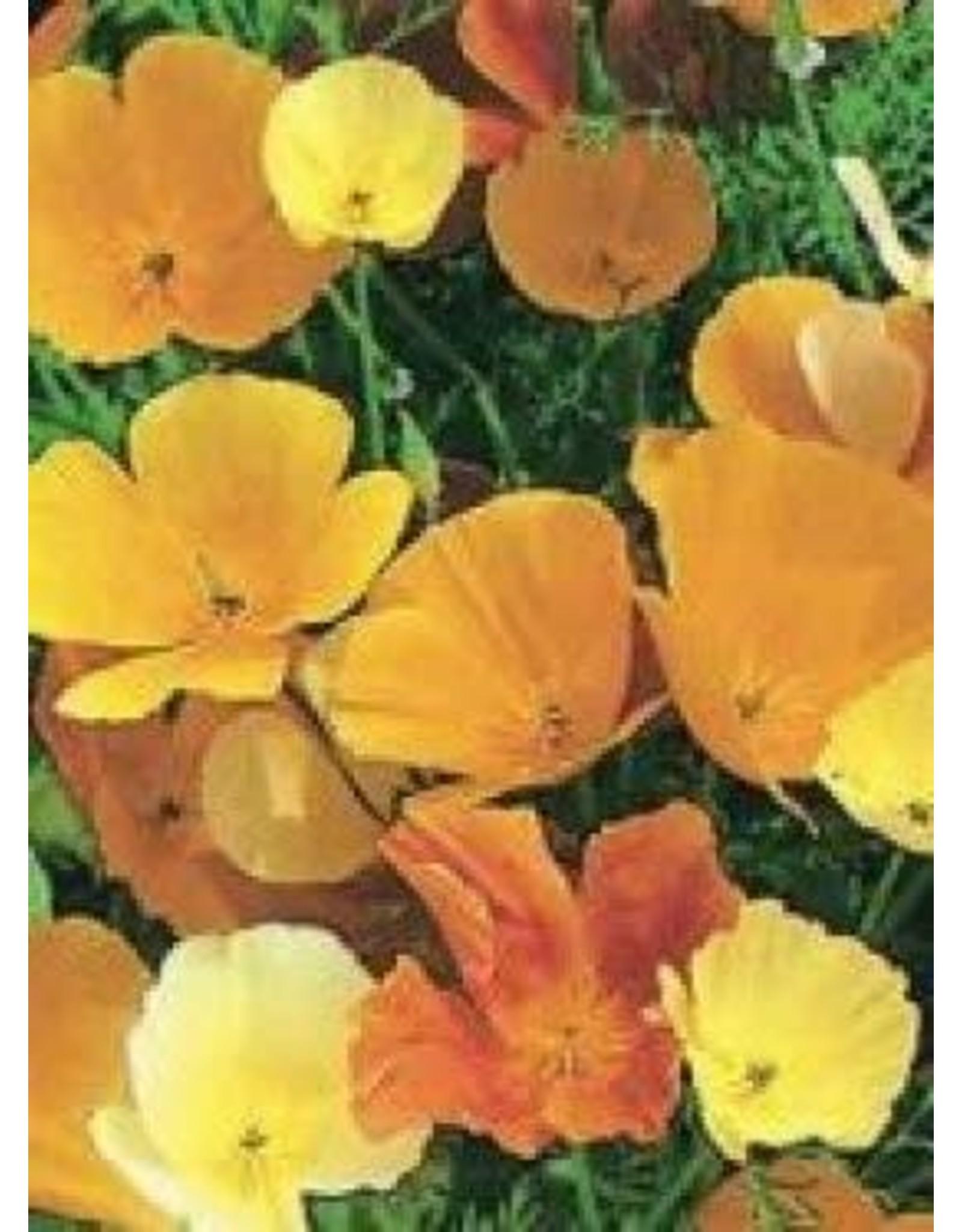 California Poppy Seeds (Mixed Colours) 5090