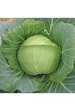 Brunswick Sauerkraut Cabbage Seeds (Aimers International) 2750