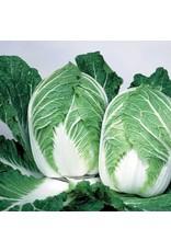 China Express Hybrid Cabbage Seeds (Aimers International) 2755