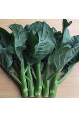 Blue Jade Hybrid Chinese Broccoli Seeds (Aimers International) 2795