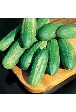 Calypso Hybrid Cucumber Seeds (Aimers International) 2815