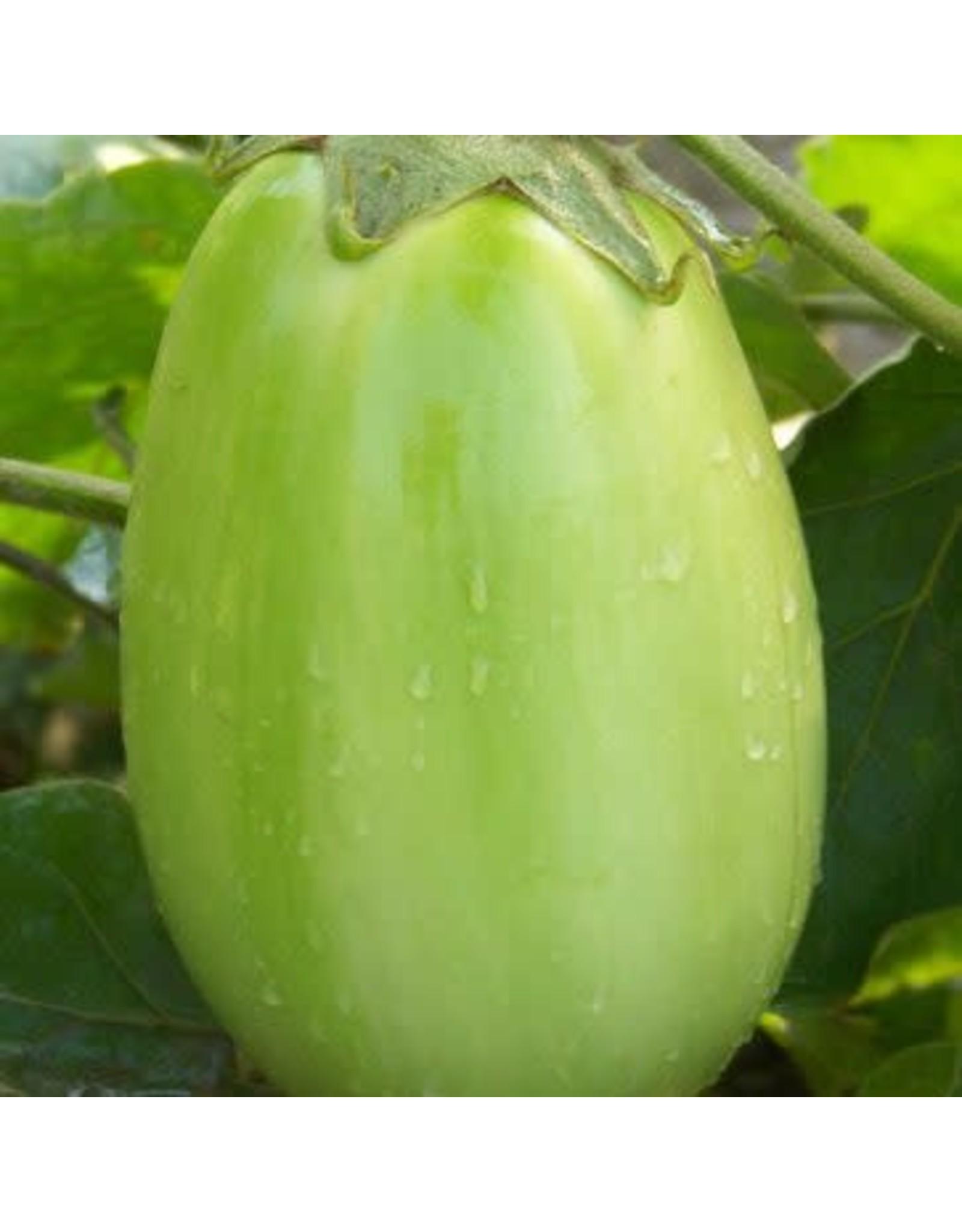 Green Punjab Eggplant Seeds (Aimers International) 2820