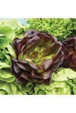 Bronze Mignonette Lettuce Seeds (Aimers International) 2835