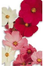 Early Sensation Mixed Cosmos Seeds 5160