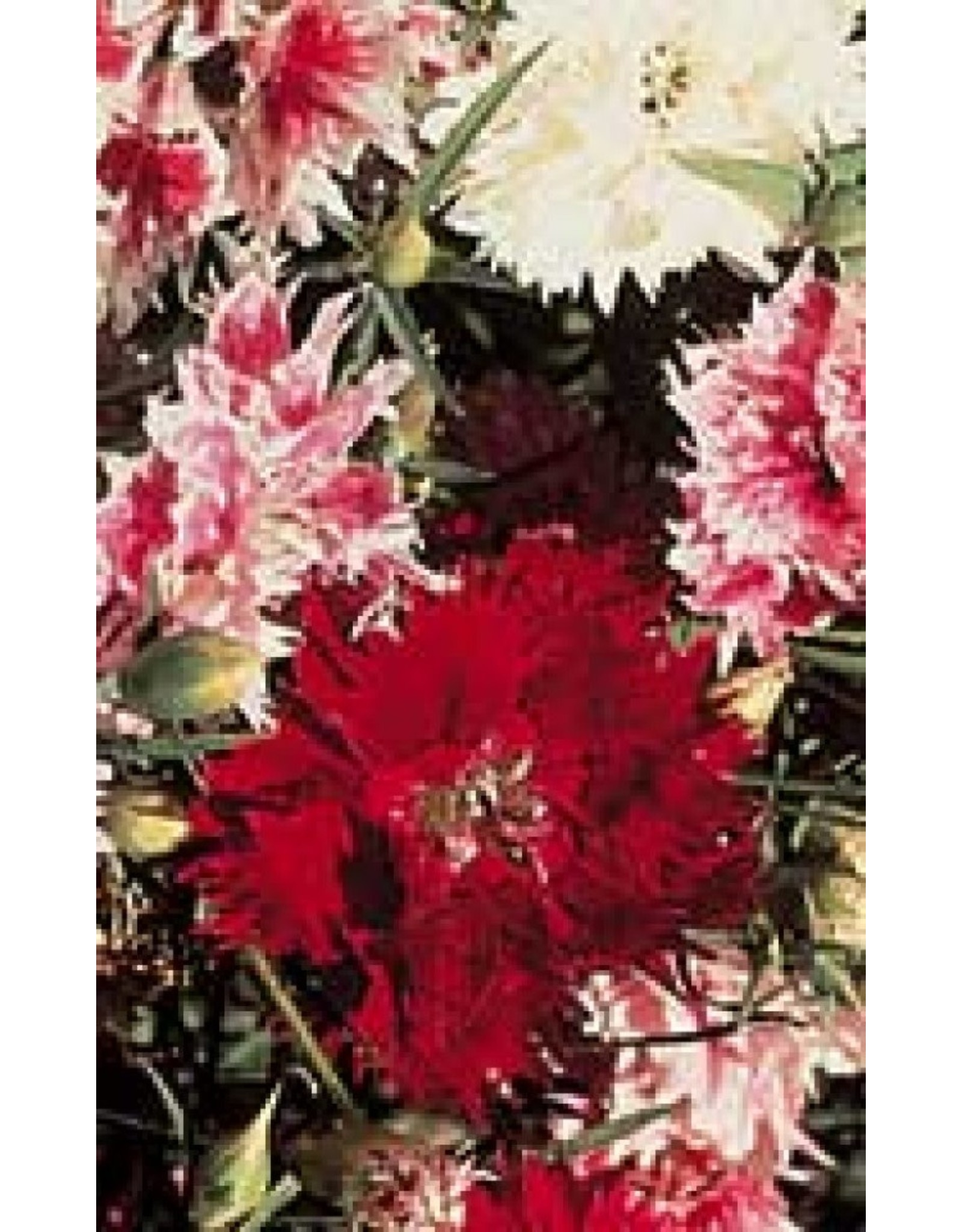 Double Mixed Dianthus Seeds (Chinese Annual Pink Type) 5205