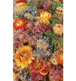 Everlastings Flower Mixture Seeds 5217