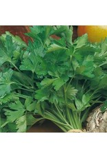 Giant of Italy Parsley Seeds (Aimers International) 2875