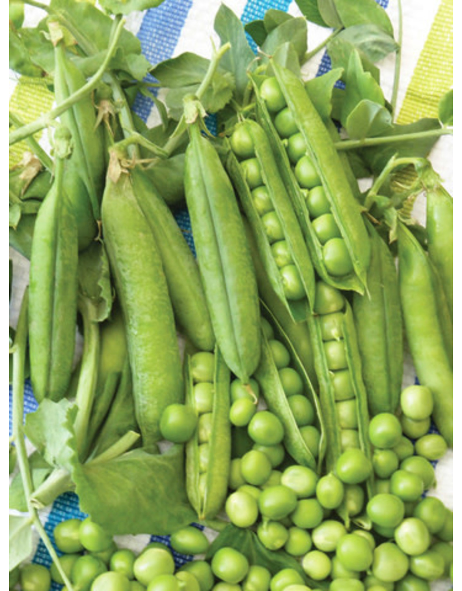 Early Perfection Pea Seeds (Aimers International) 2880