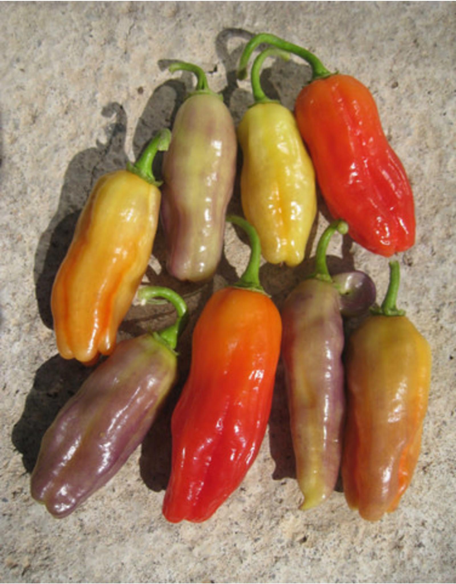 Aroma Chili Pepper Seeds (Aimers International) 2905