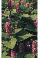 Anise Seeds 3000