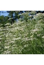 Caraway Seeds 3015