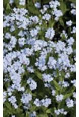 Alpestris Blue Forget-Me-Not Seeds (Alpine Type) 6460
