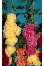 Chaters Double Mixed Hollyhock Seeds 6515