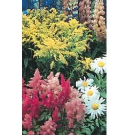 Perennial Garden Wildflower Seed Mixture 6835