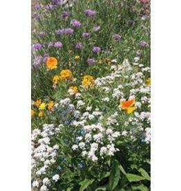 Low Growing Wildflower Seed Mixture 6825