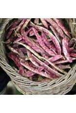 Dwarf Horticultural Bush Bean Seeds 1170