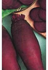 Cylindra Beet Seeds 1255