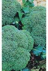 Green Sprouting Broccoli Seeds (Italian Type) 1280