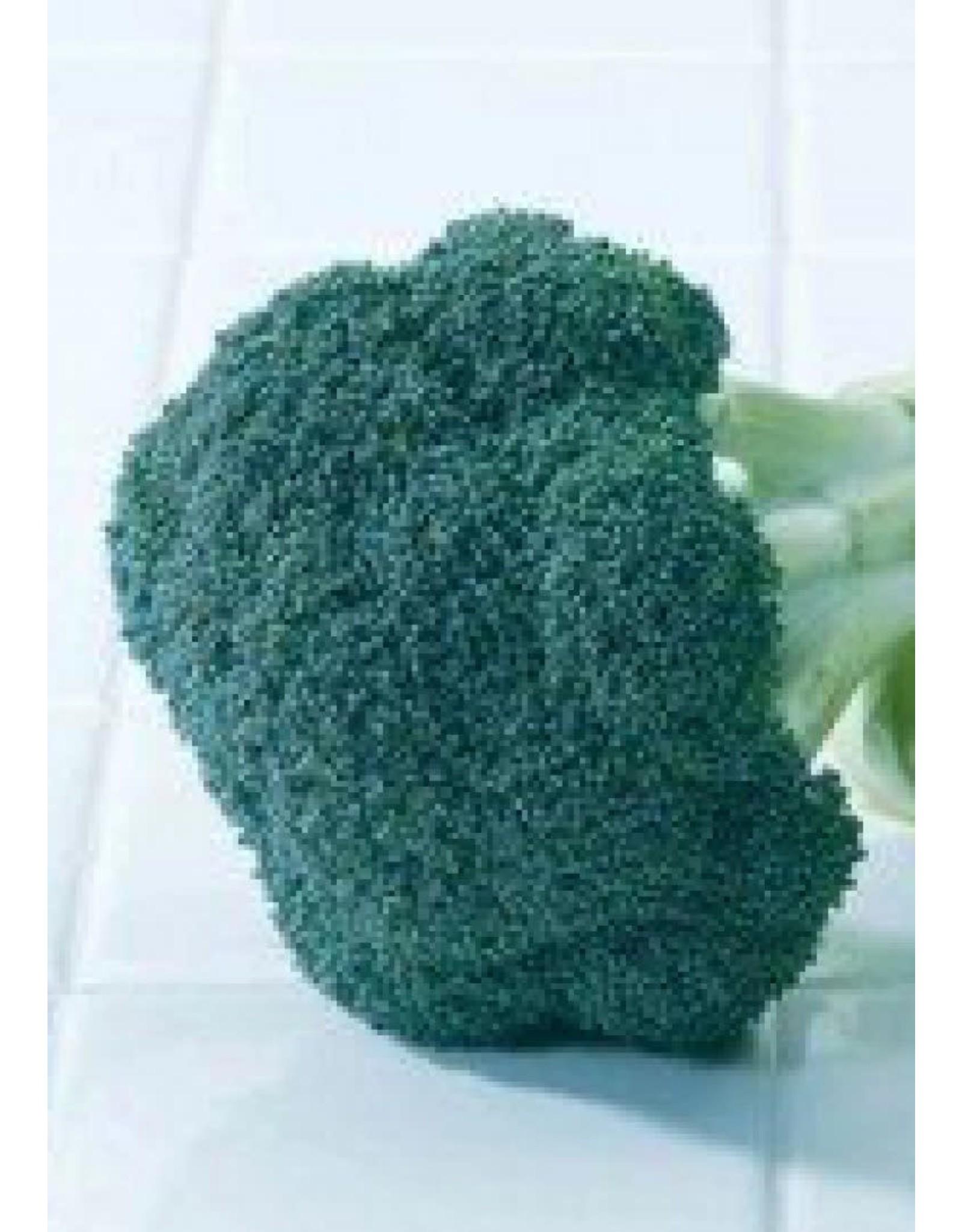 Green Magic Hybrid Broccoli Seeds 1285