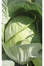 Copenhagen Market Cabbage Seeds 1305