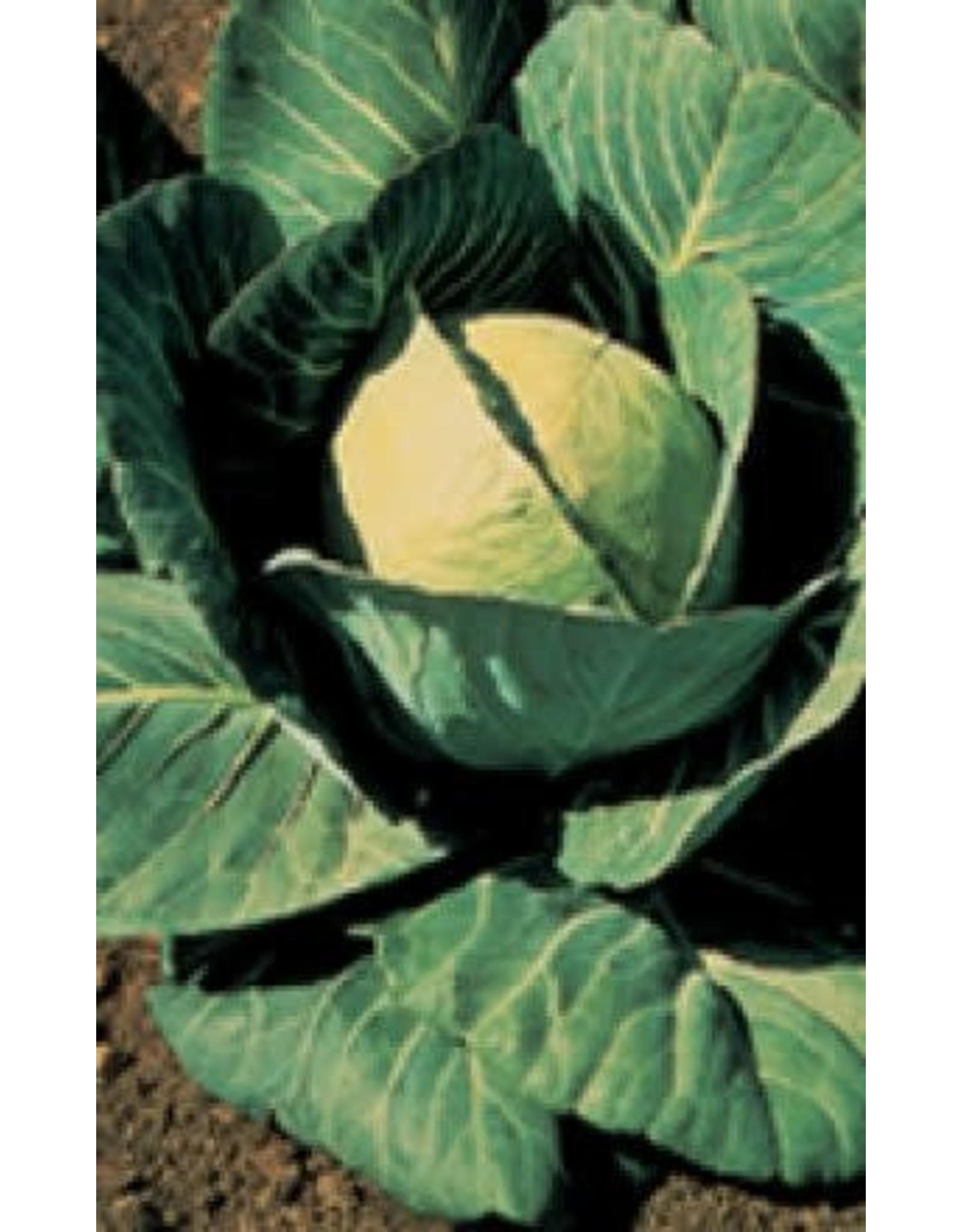 Danish Ballhead Cabbage Seeds 1310