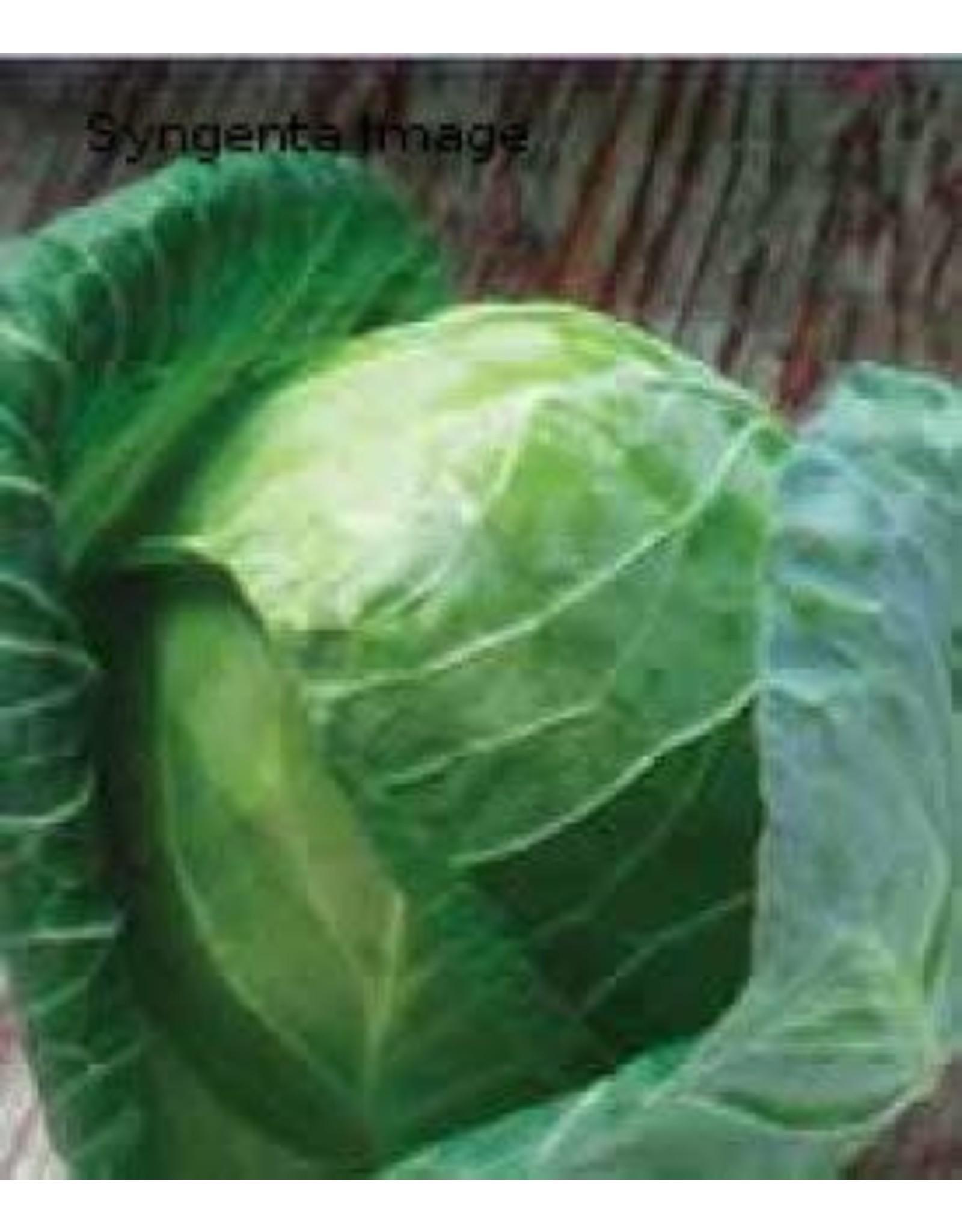 Gregorian Hybrid Cabbage Seeds 1303