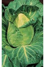 Early Jersey Wakefield Cabbage Seeds 1320