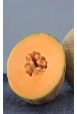 Earlichamp Hybrid Cantaloupe / Melon Seeds 1405