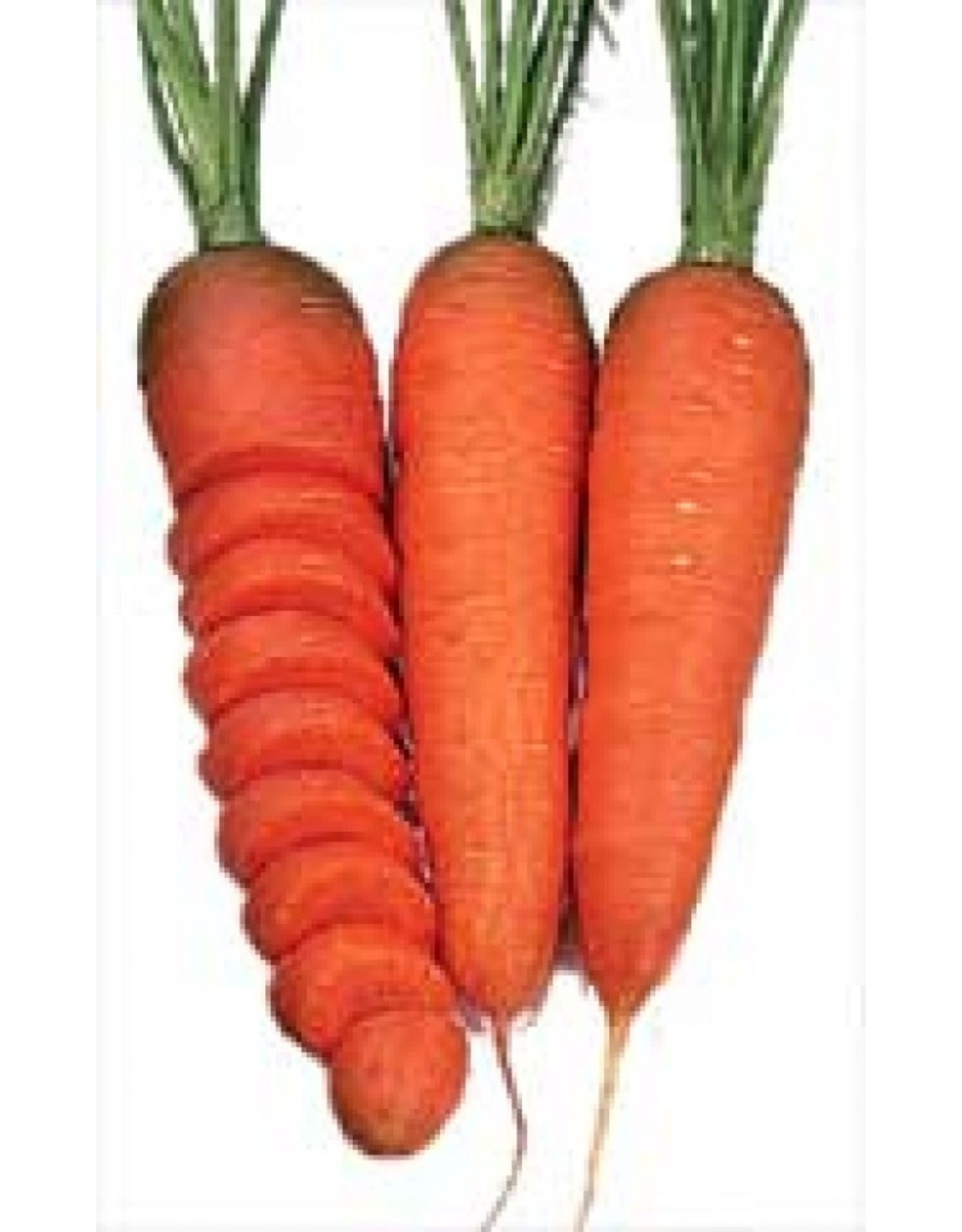 Chantenay Red Carrot Seeds 1360