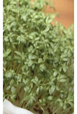 Extra Curled Pepper Grass Seeds (Mustard Group) 1500