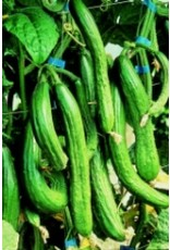 English Telegraph Cucumber Seeds 1655