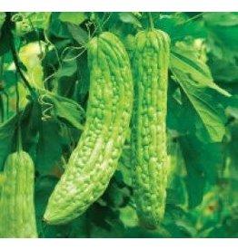 Bitter Gourd or Bitter Melon Oriental Greens Seeds 2565