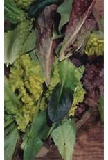 Baby Leaf Blend Lettuce Seeds (Leaf Type) 1715
