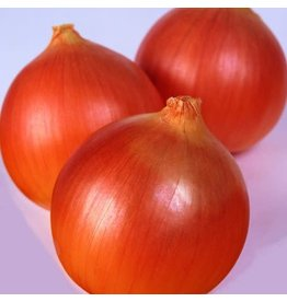Norstar Hybrid Onion Seeds 1833