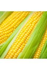 Golden Bantam Sweet Corn Seeds (Open Pollinated Type) 1510