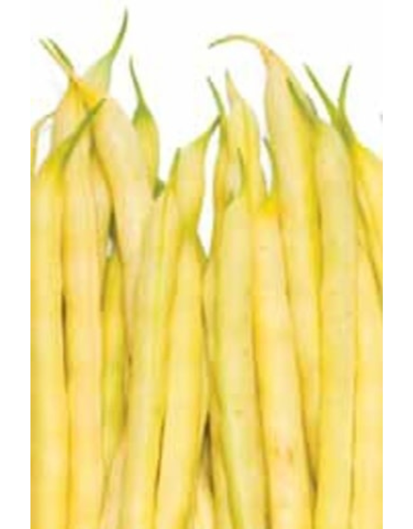 Brittle Wax Yellow Bush Bean Seeds 1150