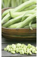 Broad Windsor Fava Bean Seeds 1195