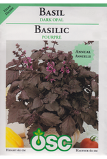 Dark Opal Basil Seeds 3130