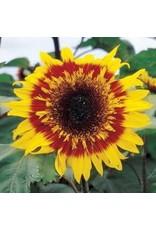 The Joker Sunflower Seeds 6192