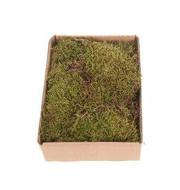Dijk Flat moss