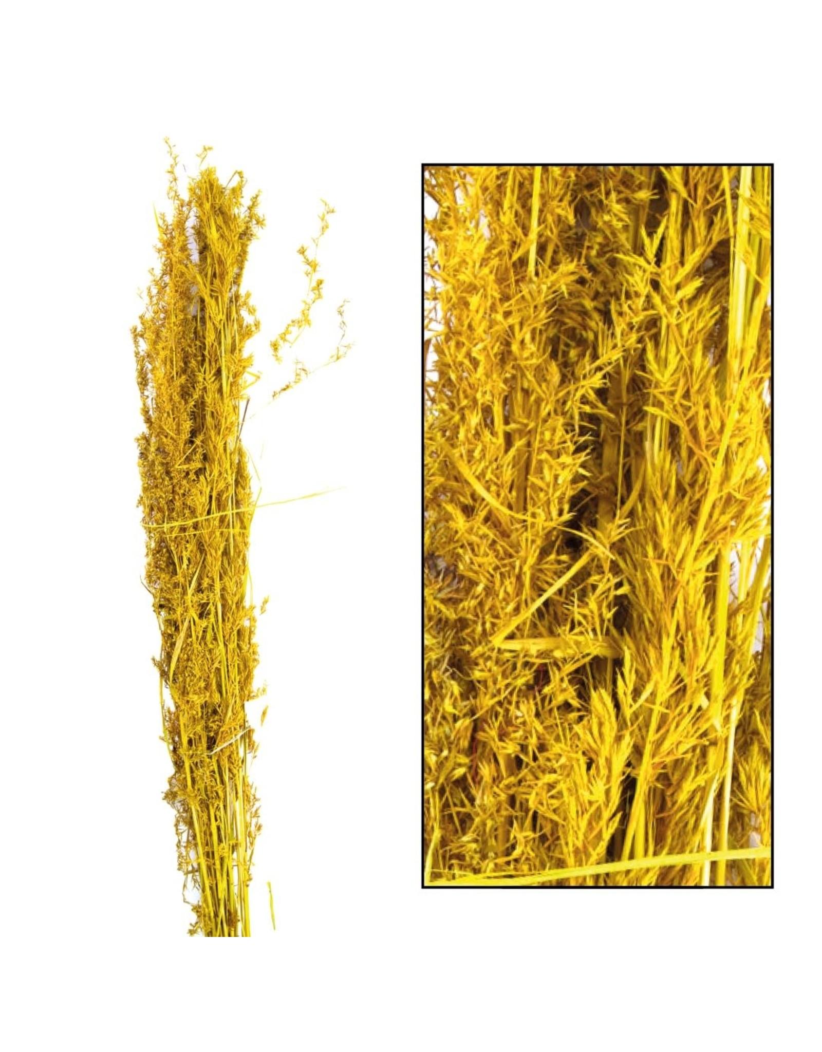 Dijk Alfonso Grass Nature 100cm 100gr