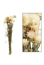 Dijk Helichrysum White
