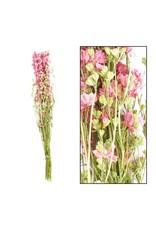 Dijk Delphinium Pink