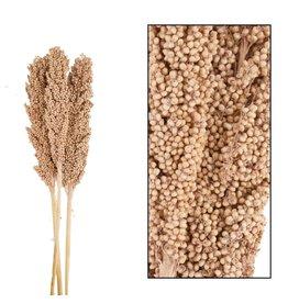 Dijk Indian Corn Nature 70cm 3pc