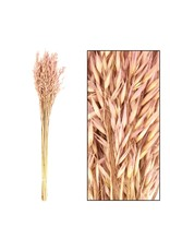 Dijk Bouquet Avena 60cm Light Pink