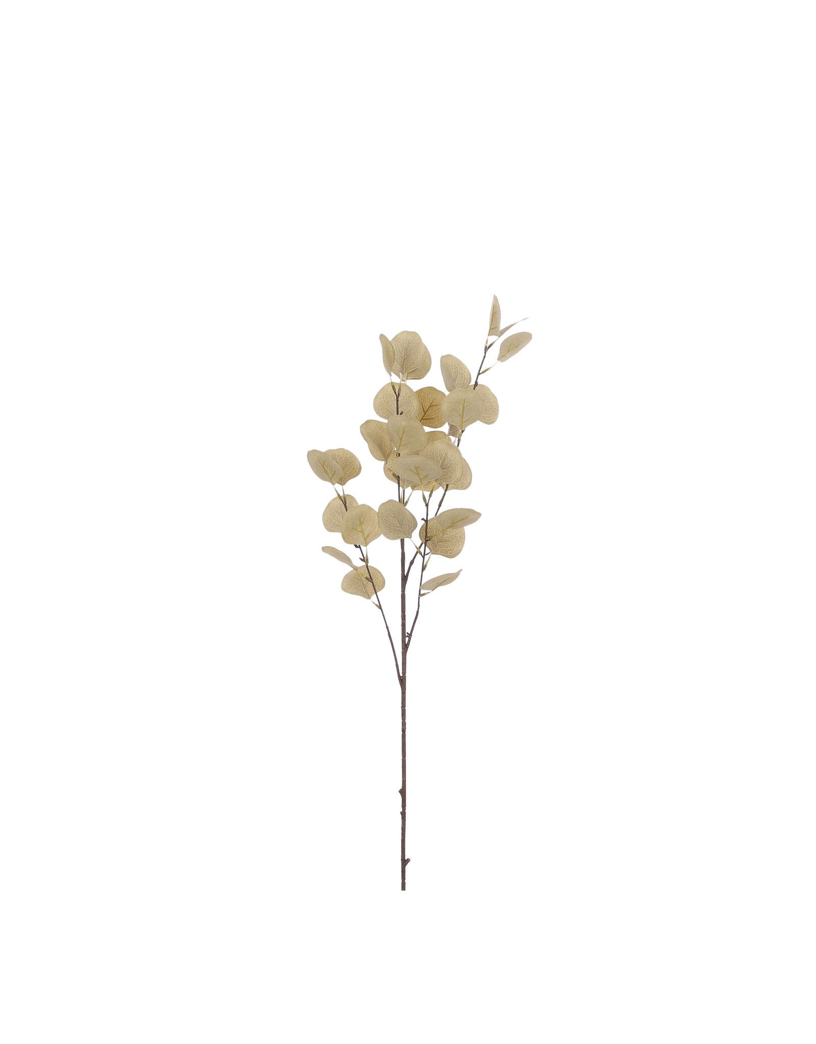 Eucalyptus l. brown - l90cm