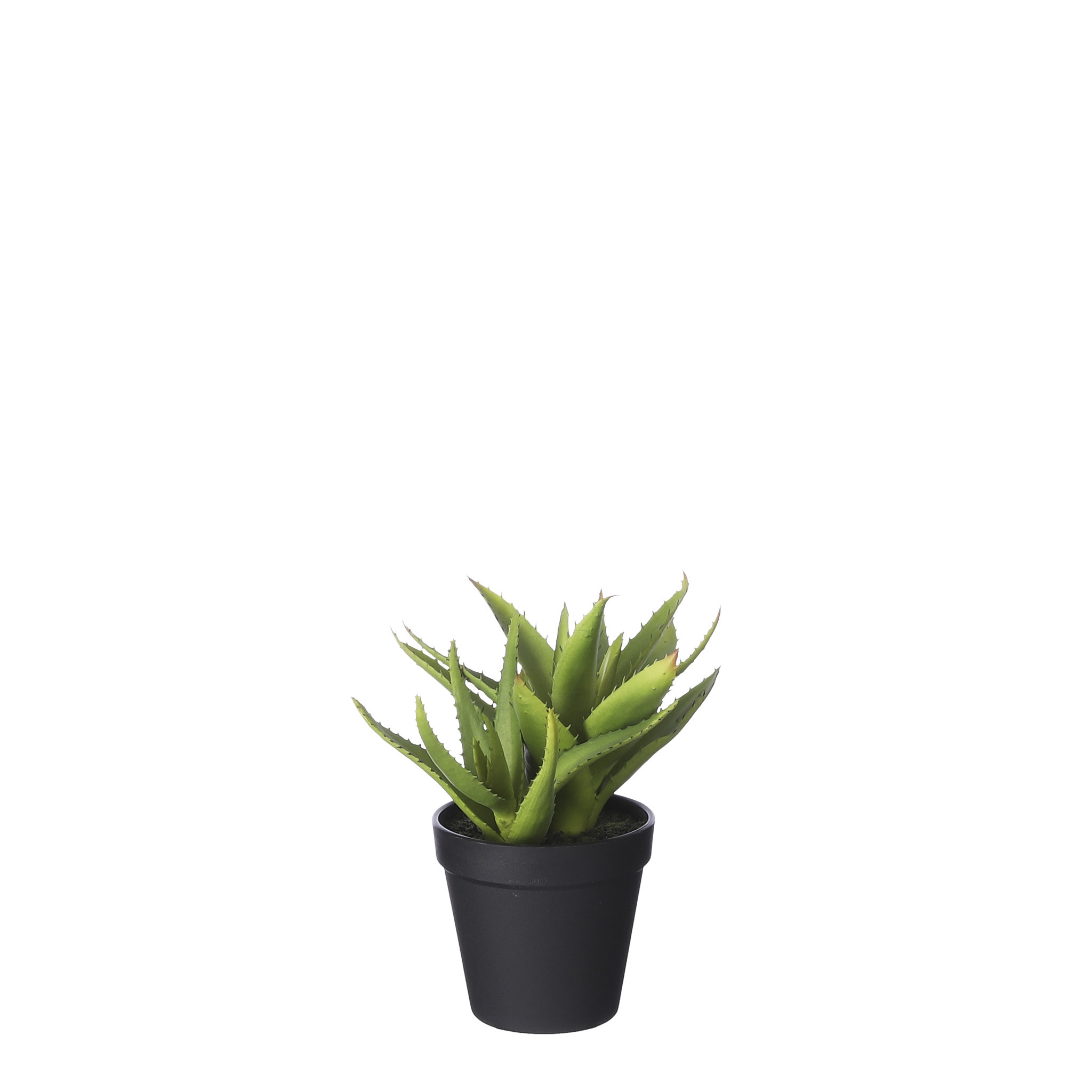 Mica Aloe Vera in Pot Green