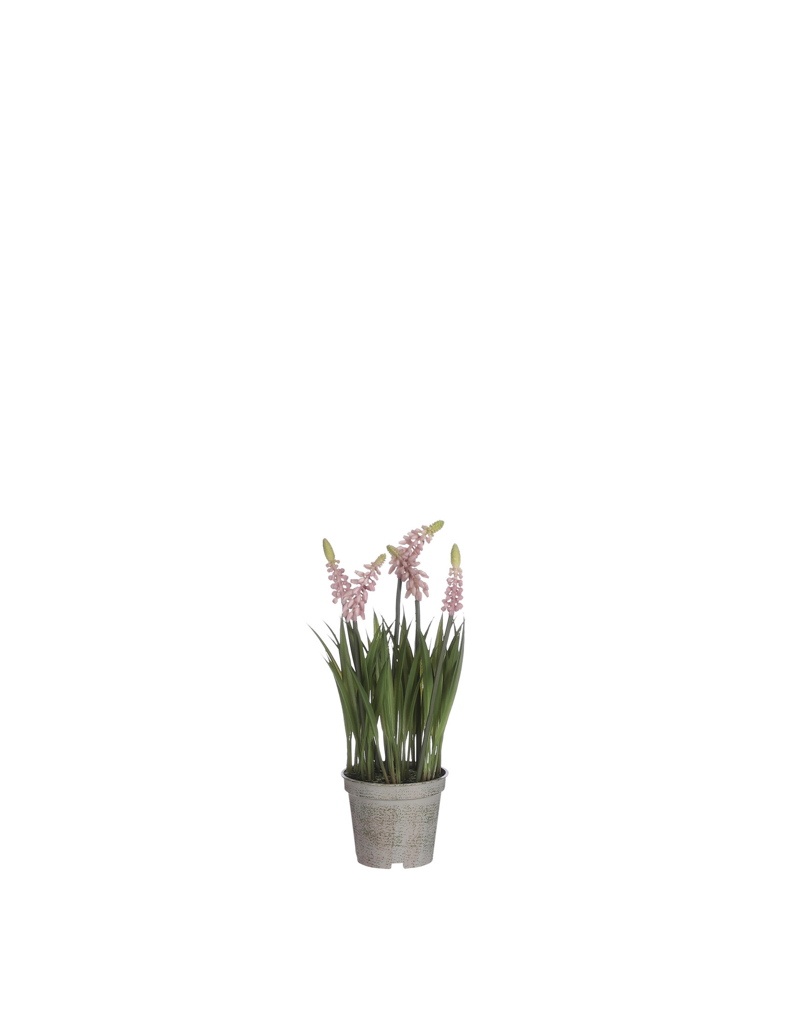 Mica Grape Hyacinth in Pot Pink - l27xd8.5cm