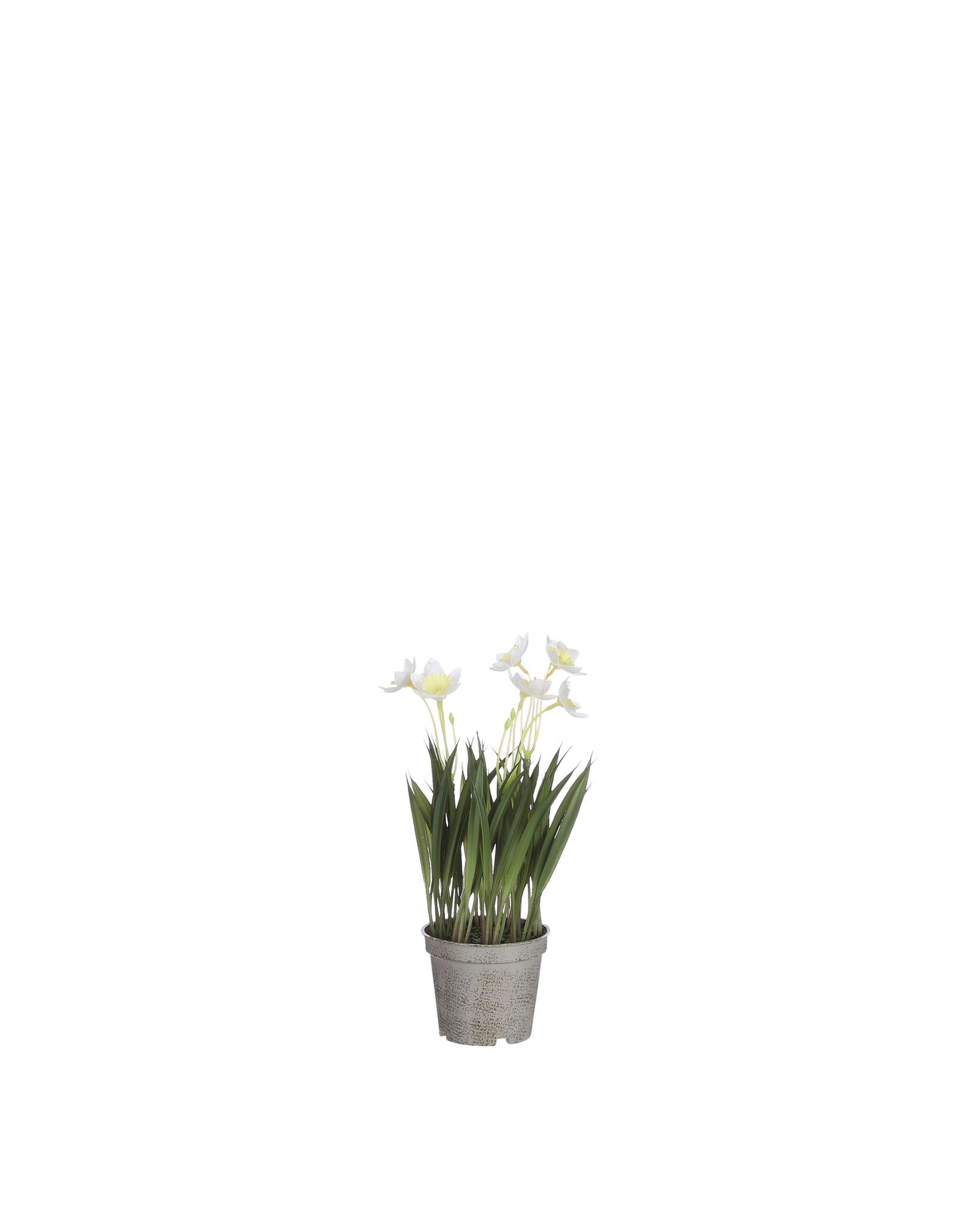 Mica Daffodil in Pot Cream - l26xd8.5cm
