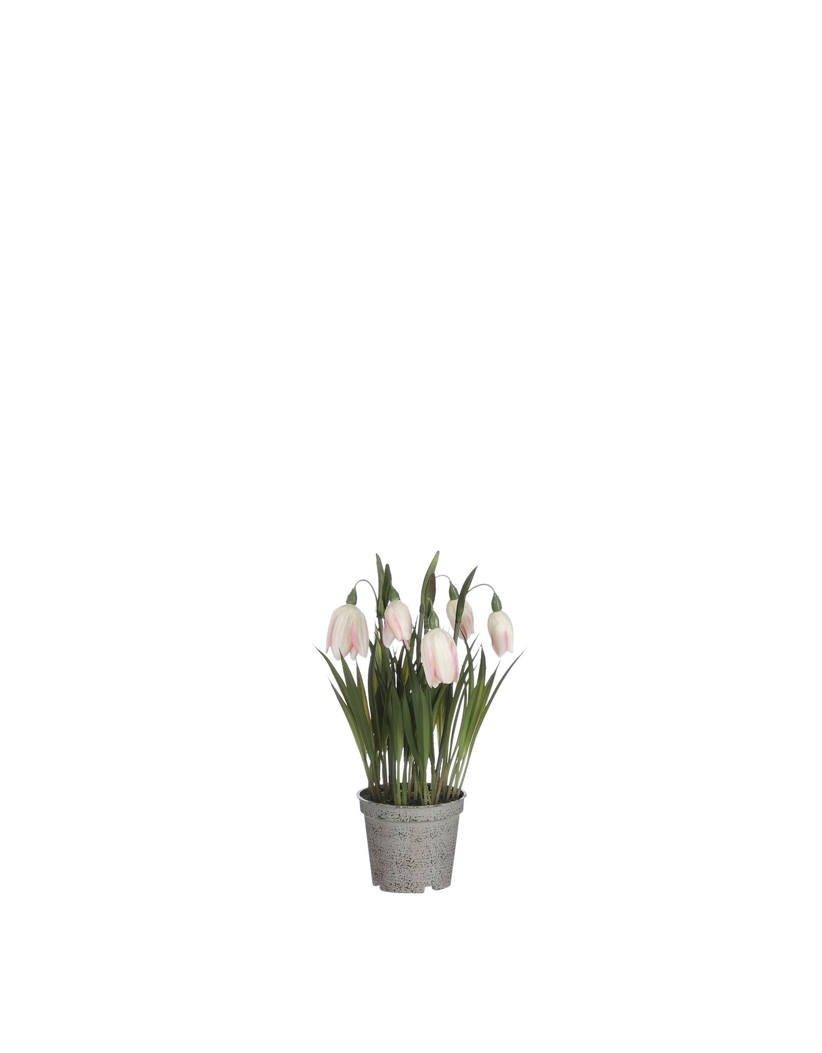 Mica Fritillaria in Pot Cream - l23xd8.5cm